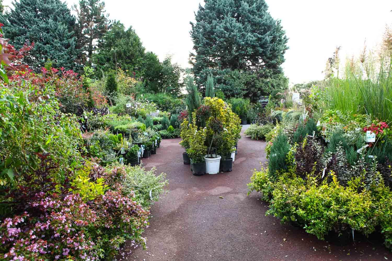 les serres du vexin sagy la jardinerie devulder plantes pour haies. Black Bedroom Furniture Sets. Home Design Ideas